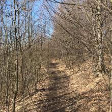 Beatiful trail in winter