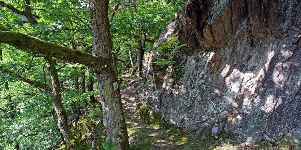 Waldstück der Caaner Schweiz