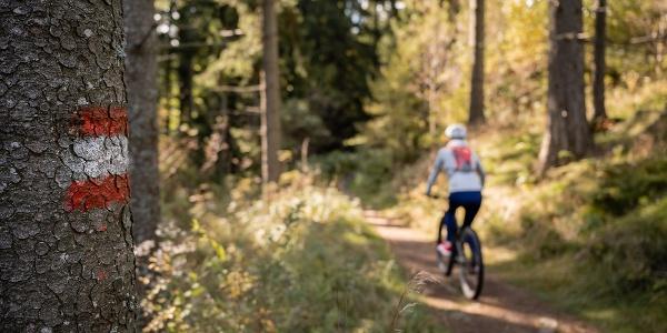 Radfahren in Vorau