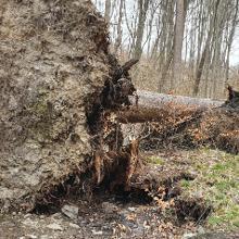 02042021 Bäume im Weg