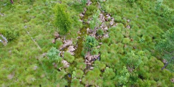 Lichtenwalder Moor