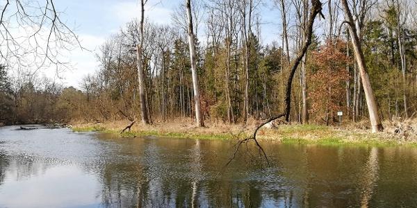 Amperschleife zwischen Langenbach und Inkofen