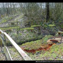 Mineralquelle Steffelner Drees am Gussbach kurz vor dem Eichholzmaar