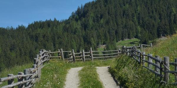 Zunächst geht es recht gemütlich dem Forstweg entlang.