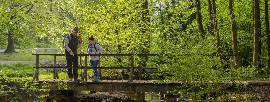 Entdeckungen auf der Sauerland-Waldroute