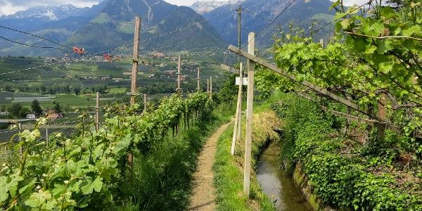 Über den Maiser Waalweg gelangt der Wanderer von Schenna nach Saltaus.