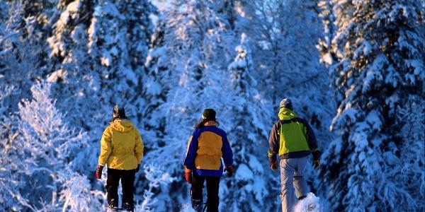 Die Tour zur Bruggeralm führt durch verschneiten Winterwald.