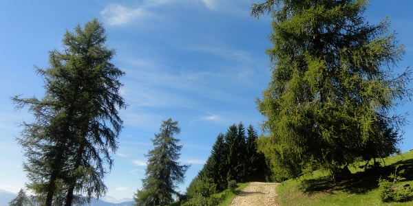 The climb to the Giogo di Meltina.