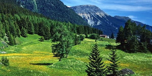 Wunderschöne Wiesenlandschaft bei Reschen