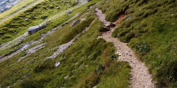 Großartige Trails unter den Felswänden des Latemar.
