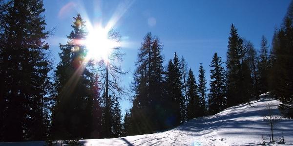 Lichtspiele im Wald bei Rodelbahn Wolfeben.