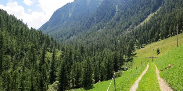 Through the green Kirchbergtal the mountain tour leads to the Karspitz.