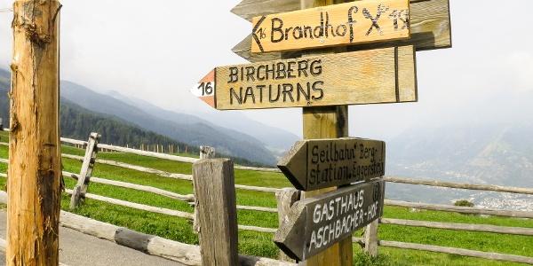 Trail nr. 16 leads you to the Brandhof hut