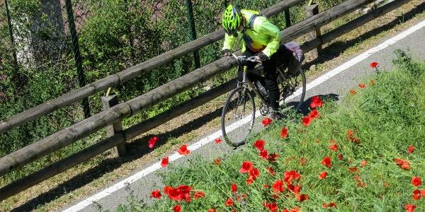 On a perfect kept bike route you bike from Merano to Bolzano.