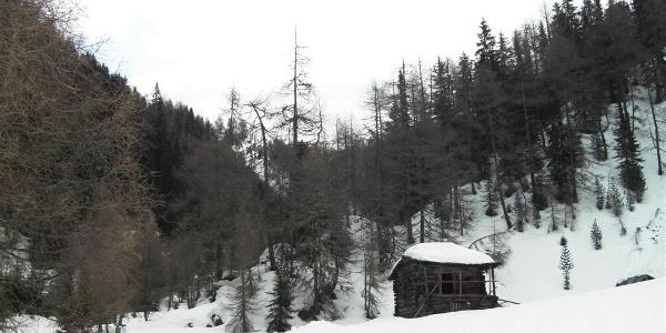 Skitour durch einsamen Wald im Gsiesertal