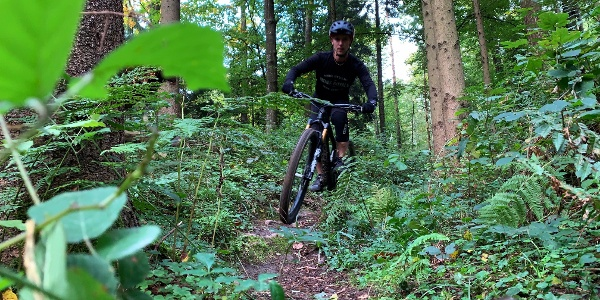 Singletrail Wald Region Aarau