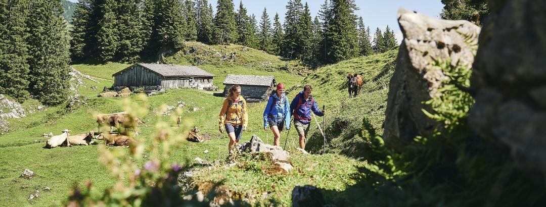 Wandern Obersattelalpe in Au