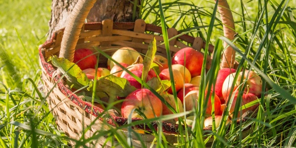 Apfelkorb mit saftig steirischen Äpfeln