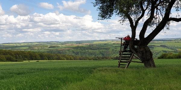 IGH-51 Panoramablick ins Taubertal vom Plateau des Tauberbergs