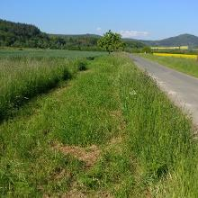 Grasstreifen