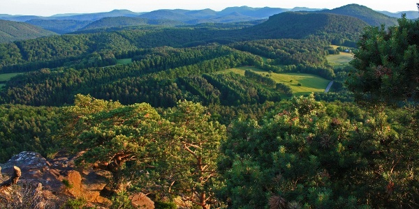 Blick vom Puhlstein in den Pfälzerwald