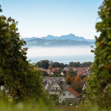 Wandern in Kressbronn am Bodensee / Blick auf den Säntis