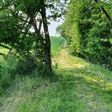 Die unebenen Wiesenwege verlangen den Gelenken so einiges ab, manche versteckte Löcher sind nicht zu erkennen unter dem abgemähtem Gras
