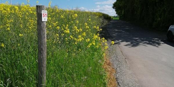 Weite Felder begleiten uns einen Großteil des Weges.