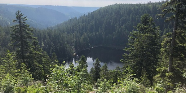 Glaswaldseeblick