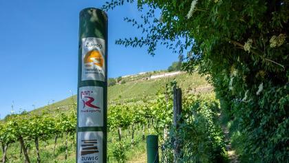 Auf schmalen Pfaden bergauf in die Winninger Weinberge.