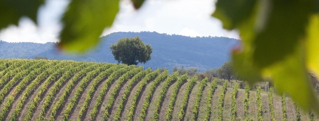 Wandern in Weinviertel
