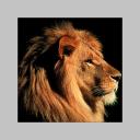 Immagine del profilo di stefano sanesi