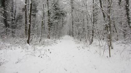 Im Villewald (Jan. 2013)