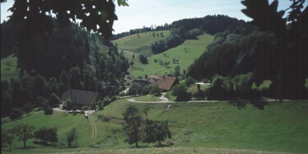 Hermann-August-Weg > Harnischwald