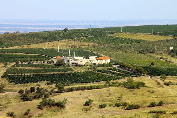 The Lacerta Vinery