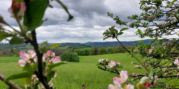 Blick in die Hintere Sächsische Schweiz vom Panoramaweg