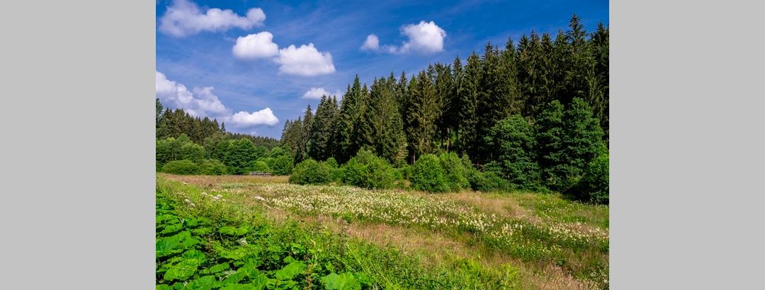 Schwarzbachtal im Sommer