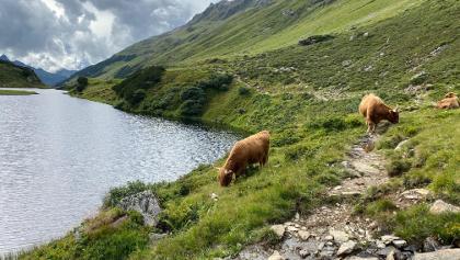 Achtung bei Kühen mit Jungvieh….!😜