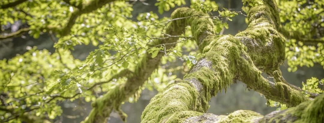 Natur im Spessart
