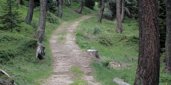 Sentiero dei larici