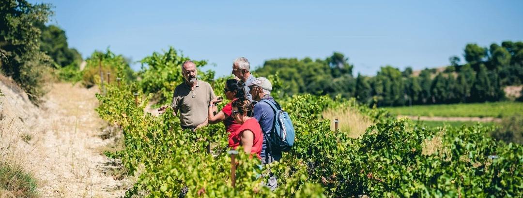 Promenade oenotouristique dans les vignobles des Dentelles de Montmirail