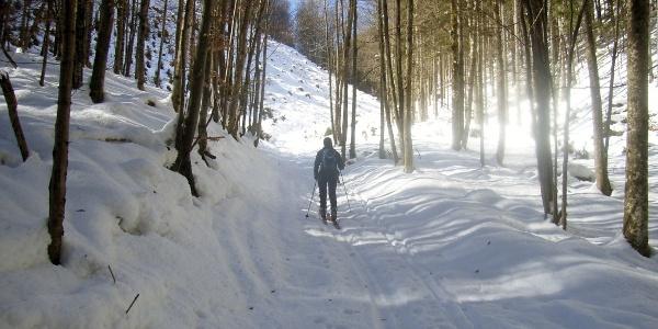 Sanfter Aufstieg durch den Wald im ersten Teil der Tour
