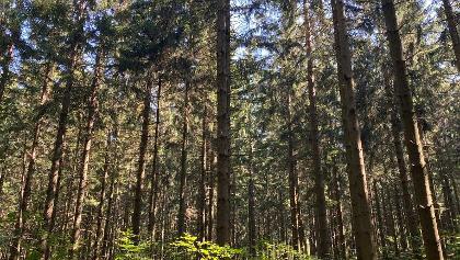 Ein sonniger Tag auf dem Hochwald-Pfad
