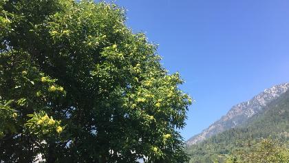 Castagne e cielo azzurro
