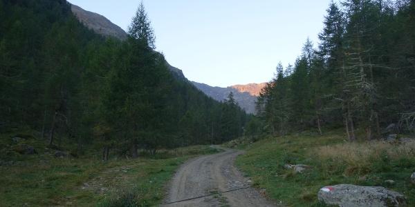 Der gemütliche Forstweg zur Mastaunalm
