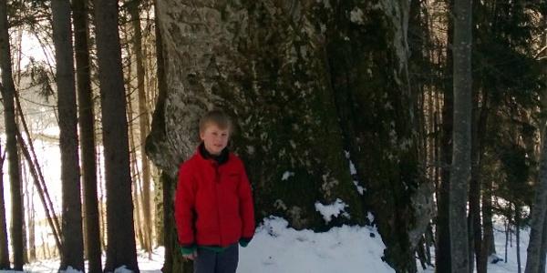 Imposante, geschützte Rotbuche im Eris Töbeli