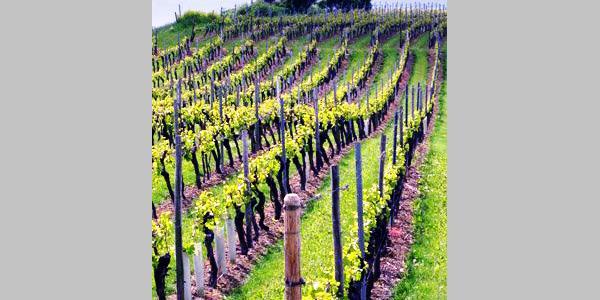 Hüttberg Weinwanderung Ebersheim