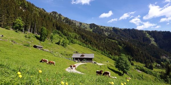 Aigenalm-Paulhütte, 1.280 m