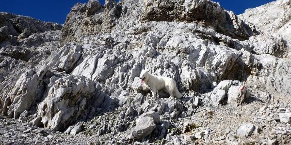 felsige Passage beim Anstieg zur Kaskarspitze