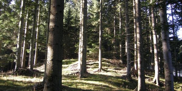 Wald - lichtdurchflutet